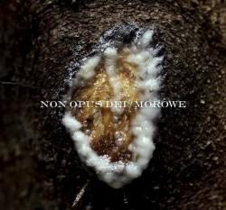 Non Opus Dei/Morowe – Dziwki Dwie